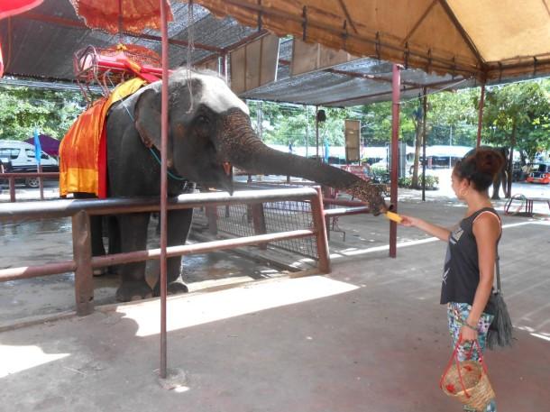 12 ayutthaya olifanten
