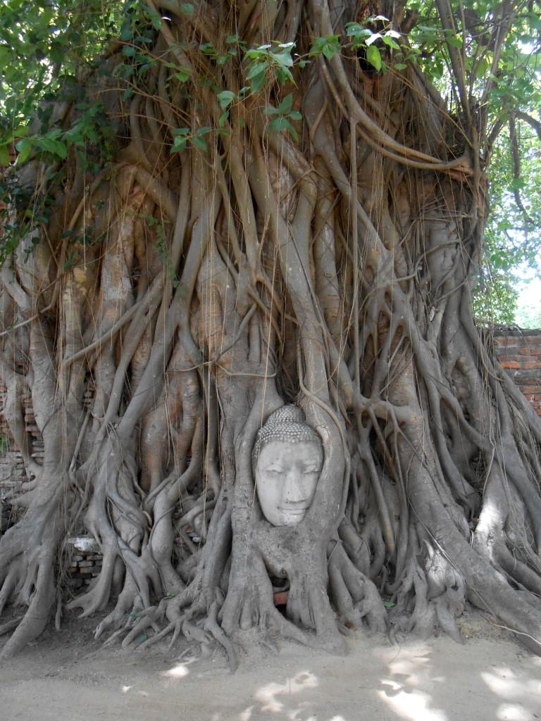 3 ayutthaya boom boeddha