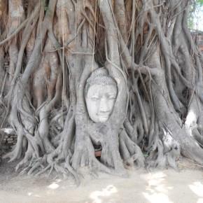 1 tree buddha ayutthaya-001
